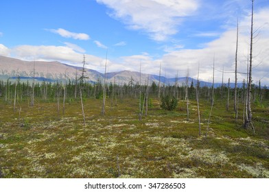 Tundra in the foothills of the Putorana plateau. The landscape of the tundra, the Putorana plateau, Siberia, Russia.