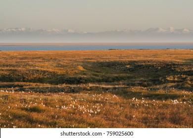 Tundra lit up by 24 hour sun in Kaktovik, Alaska