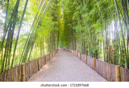 The tunnel of the bamboo forest in asia