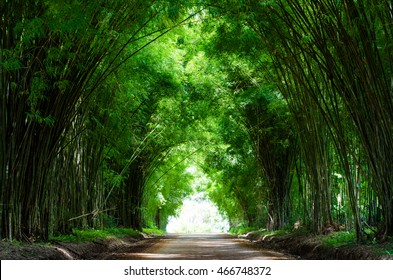 Tunnel bamboo trees and walkway, Khao kho district, Phetchabun province in Thailand