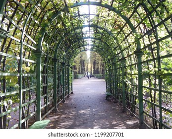 Tunnel of green plants in the park, walkway in the form of an arcade