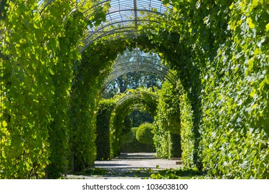Tunnel from green trees in Rundale Palace, Latvia