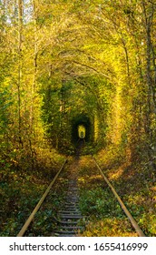 Tunnel of love. Railways. Autumnal, colorful tunnel of trees and bushes. Bright, sunny day.