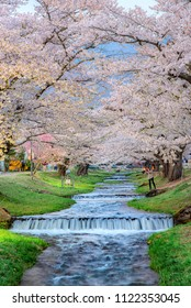 Tunnel of sakura or cherry blossom tree approximately 1 km path along the banks of the Kannonji river in, Kawageta, Inawashiro Machi, Yama Gun, Fukushima, Japan.