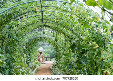 tunnel of the squash and pumpkins