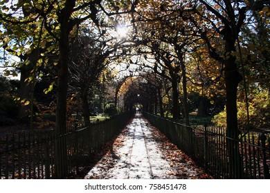 Tunnel of Trees - Birdcage Walk, St Andrews Churchyard, Clifton, Bristol