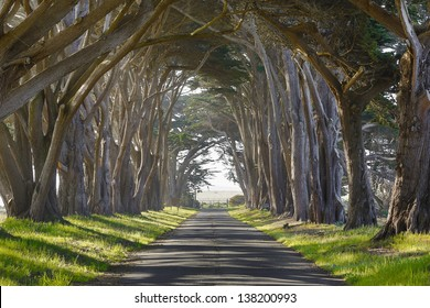 Tunnel of trees leading lines