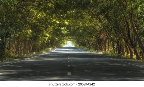 Tunnel of trees in thailand