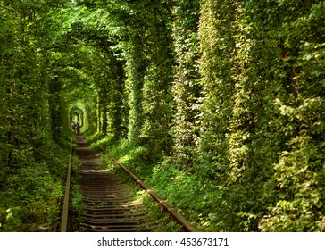 tunnel of trees through which the train runs, romantic tunnel for lovers