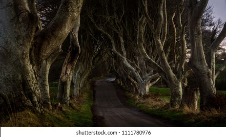 Tunnel-like avenue of intertwined beech trees called Dark Hedges, Northern Ireland is the popular tourists attraction
