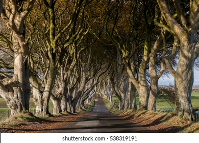 Tunnel-like avenue of intertwined beech trees called Dark Hedges, Northern Ireland is the popular tourists attraction.