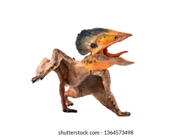 Tupuxuara (Pterodactyl) Dinosaur on white   background .