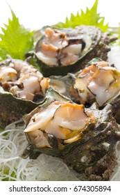 Turban shell sashimi