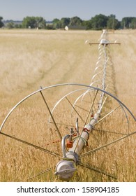 Turf farm Irrigation system on the farm field.