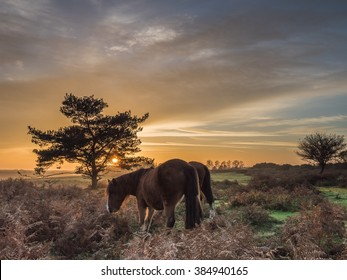Turf Hill New Forest Sunset