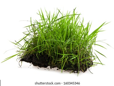 turf on a white background