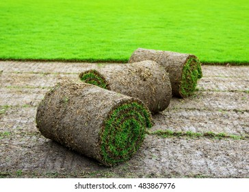 Turf rolls in the grass field.