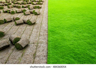Turf rolls in the grass field ready for transfer.