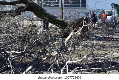 TURIN, ITALY, CIRCA DECEMBER 2018:  People looking a tree uprooted by a storm in an urban city square.