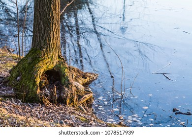 """Turin, Italy - February 2, 2011: Root and tree trunk on the bank of a small lake in a public park. The """"Parco della Pellerina"""" is the largest public park in Europe."""