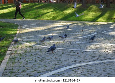 Turkey - Beykoz. pigeons flying in the ground and in the air.The flock of pigeons waiting to eat from tourists who visit the public park.