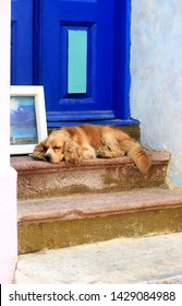 turkey bozcaada front door sleeping dog