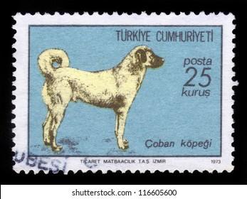 TURKEY - CIRCA 1973: A stamp printed in Turkey shows sheepdog, Turkish Sivas Kangal Dog , circa 1973
