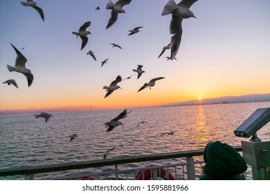İstanbul Turkey, January 5, 2017: seagulls, sea birds flying ove sunset sea. Blue sky with sunset. young boy   feeds Seagulls from ferry boat.