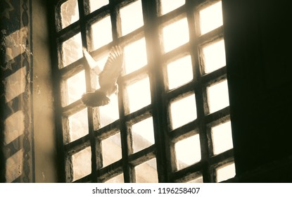TURKEY MARCH 2012: Amazing scenery of a dove looking towards the sunlight trough the window of the Hagia Sophia (Ayasofya), the former Greek Orthodox Christian patriarchal cathedral in Istanbul Turkey