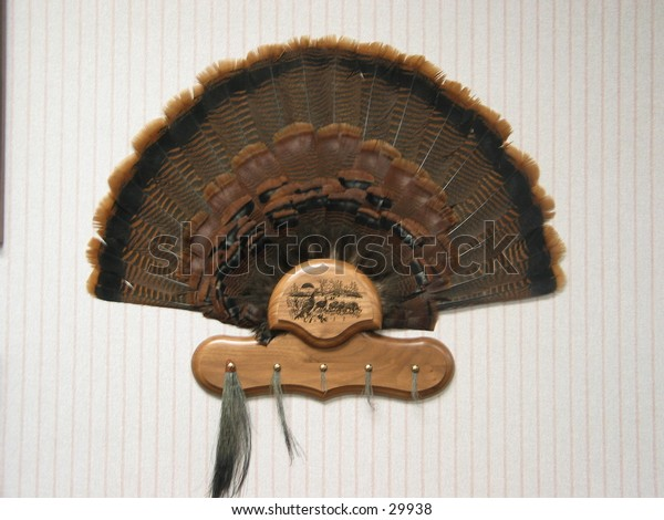 Turkey tail feathers and beards from Minnesota.