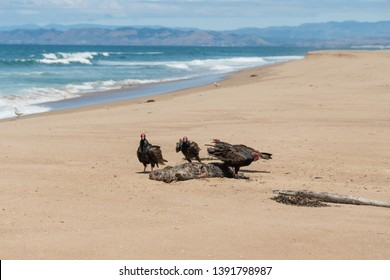 Vultures Circling Images Stock Photos Amp Vectors