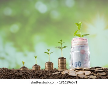 Turkish coins in a glass jar. Young plants growing on coins. Investment and Finance Concept