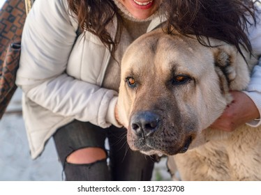 A Turkish girl hugs an Anatolian shepherd dog (sivas kangal)