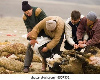 """Turkish men slaughter a cow in """"kurban bayram"""""""