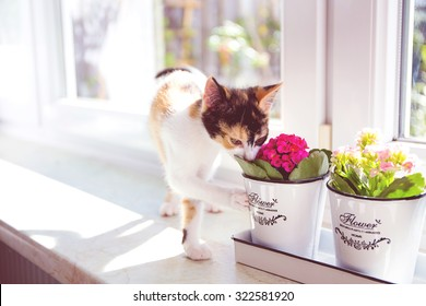 Turkish Van cat smelling the flower