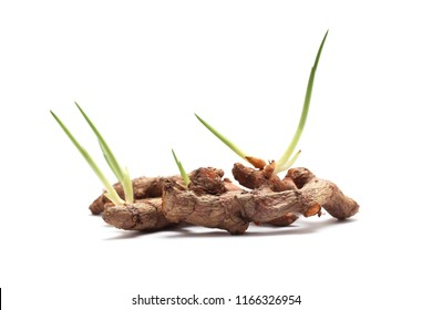 Turmeric plant isolated on white background.Plant for herbs.