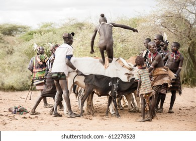 TURMI, ETHIOPIA - AUGUST 17,2015: unidentified boy from hamer tribe take a run up for jumping over the bulls during the bull jumping ceremony. Bull jumping is an initiation ceremony for young boy.