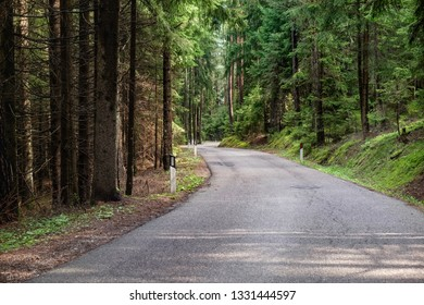 Turn of the asphalt road leading through thick Italian forest with high pine and fir trees, amazind outdoor landscape