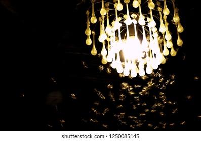Turn on lamp with many of Mayfly in rainy season