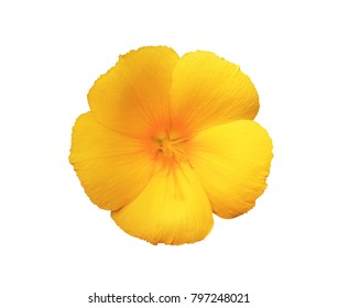 Turnera ulmifolia L. ,morning glory ,Ipomoea nil ,Ipomoea morning glory ,yellow flower isolated on white background. with clipping path