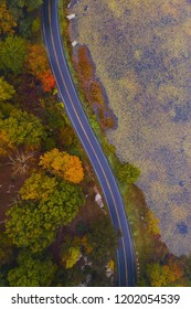 turning autum road aerial with tree tops and pond on each side of the road