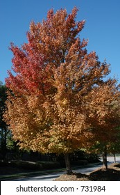 Turning of the leaves in North Carolina