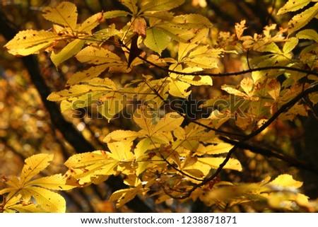 Turning Yellow Magnolia Stock Photo Edit Now 1238871871 Shutterstock