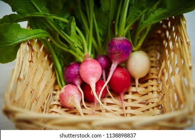 Turnips in basket