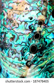 Turquoise abalone paua shell detail