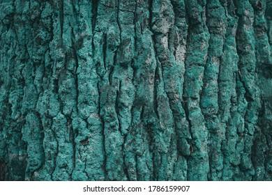 Turquoise background. Bark of tree. Moss on wood bark.