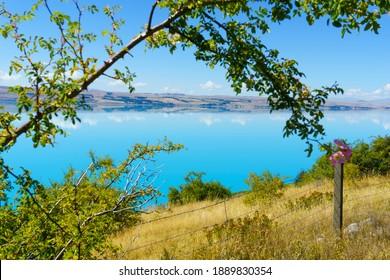 Turquoise blue water of Lake Pukaki with golden grass and defocused brach framing idyllic scene.