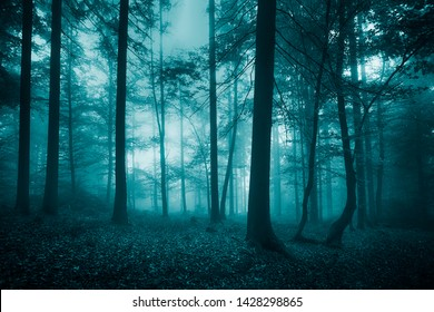 Turquoise colored foggy woods landscape. Enchanted light in the misty forest.