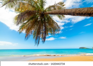 Turquoise sea and palm tree in La Perle beach in Guadeloupe, French west indies. Lesser Antilles, Caribbean sea