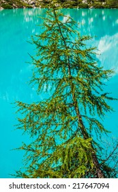 Turquoise Sorapis Lake with Pine Trees and Dolomite Mountains in the Back - Sorapis Circuit, Dolomites, Italy, Europe